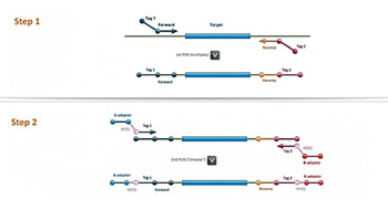 Image: The two step amplification process involved in Multiplex Amplification of Specific Targets for Resequencing (MASTR) assay technology (Image courtesy of Multiplicom).