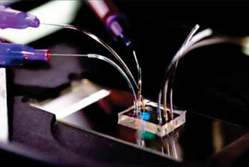 Image: The microfluidic device for ascertaining neutrophil motility patterns (Photo courtesy of the BioMEMS Resource Center, Massachusetts General Hospital).