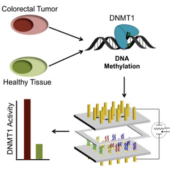 Image: Schematics of a DNA-modified, two working-electrode arrays to measure methyltransferase activity from tissue samples (Photo courtesy of Ariel Furst/Caltech).