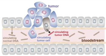Image: The principle of blood-based DNA testing (Photo courtesy of Sysmex-Inostics).