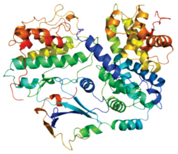 Image: Model of the p27KIP1 (cyclin-dependent kinase inhibitor 1B) protein (Photo courtesy of Wikimedia Commons).
