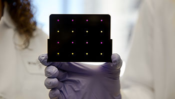 Image: A black cartridge containing the innovative paper-based diagnostic for detecting Zika virus: areas that have turned purple indicate samples infected with Zika virus, while yellow areas indicate Zika-free samples (Photo courtesy of Wyss Institute at Harvard University).